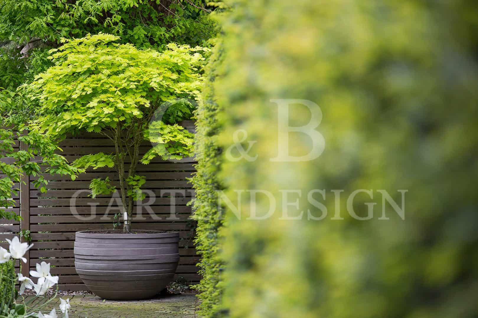 Super Pflanzgefäße | Pflanzkübel | Gempp Gartendesign OW27