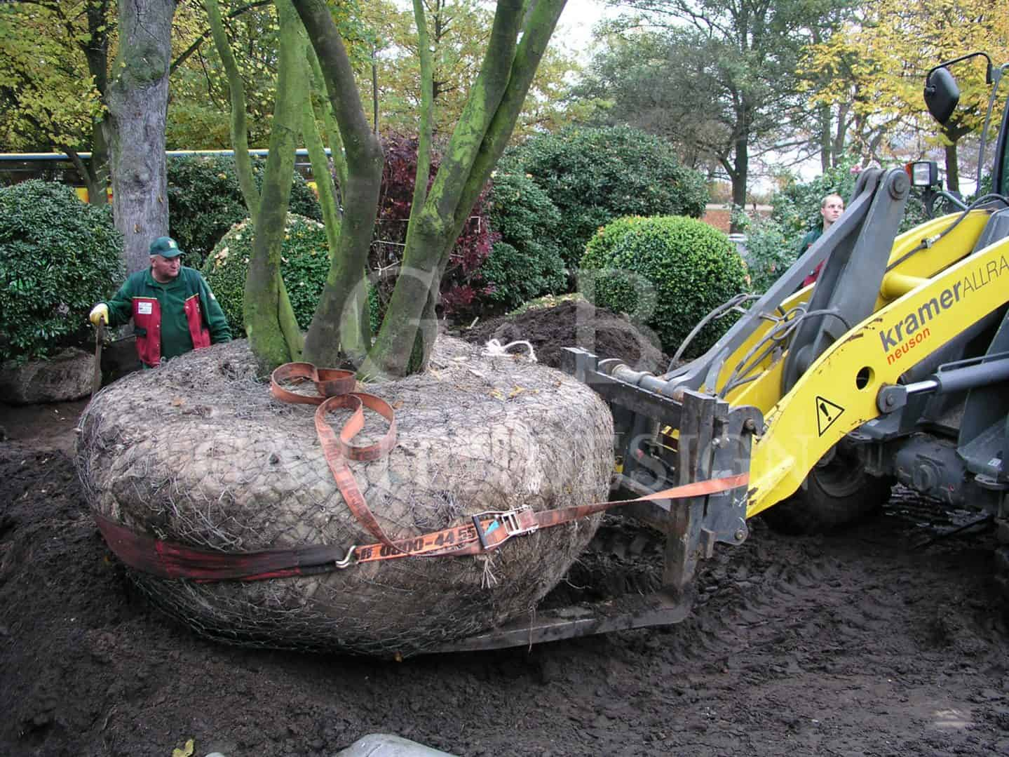 gartenbau Gartendesign Gartenplanung Hamburg