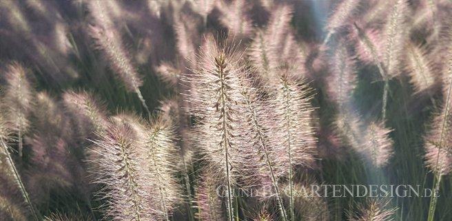 Gräsergarten: Faszination Gartengestaltung mit Gräsern
