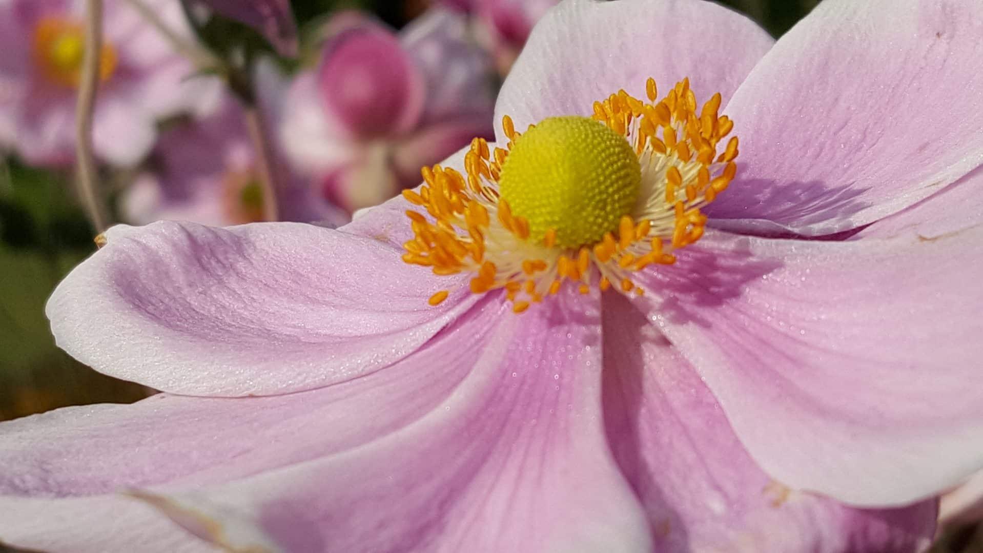 Staudenbeet bepflanzen herbstbluete