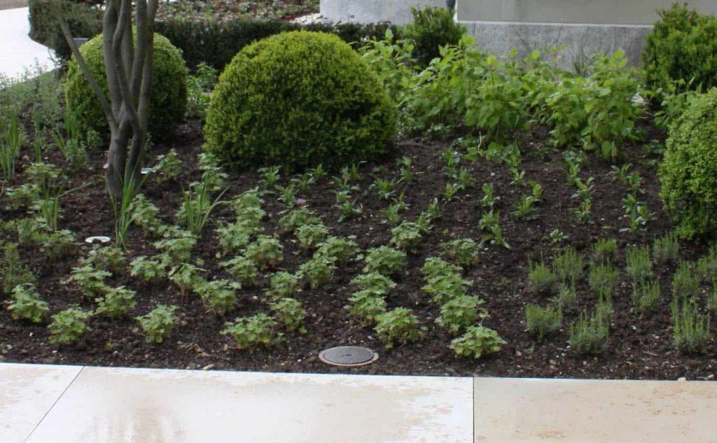 gartendesign mit pflanzen