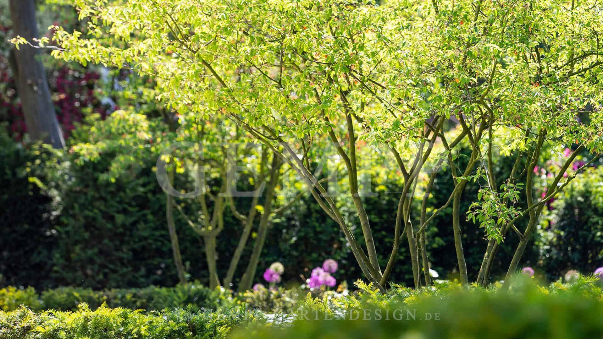 Pflanzen und Bäume für den Garten