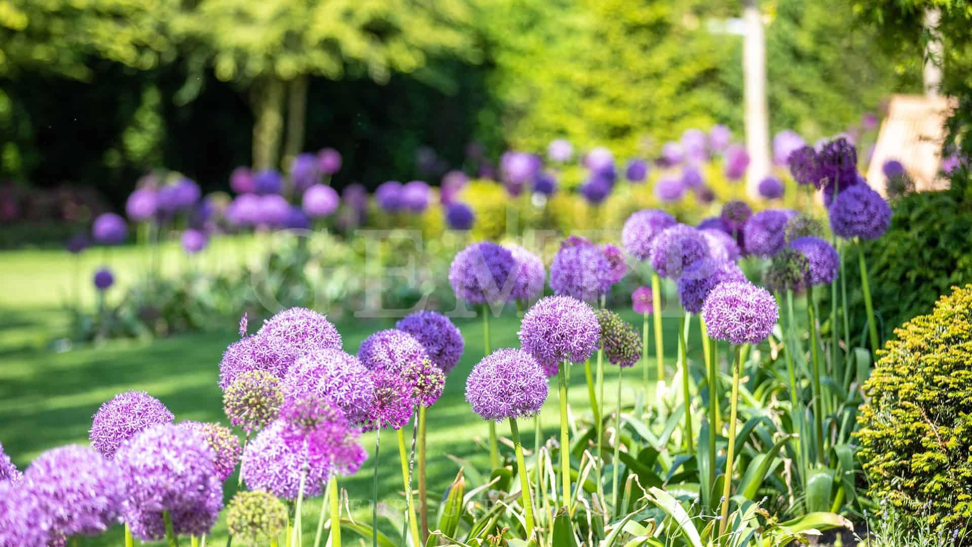 Garten neu gestalten lassen