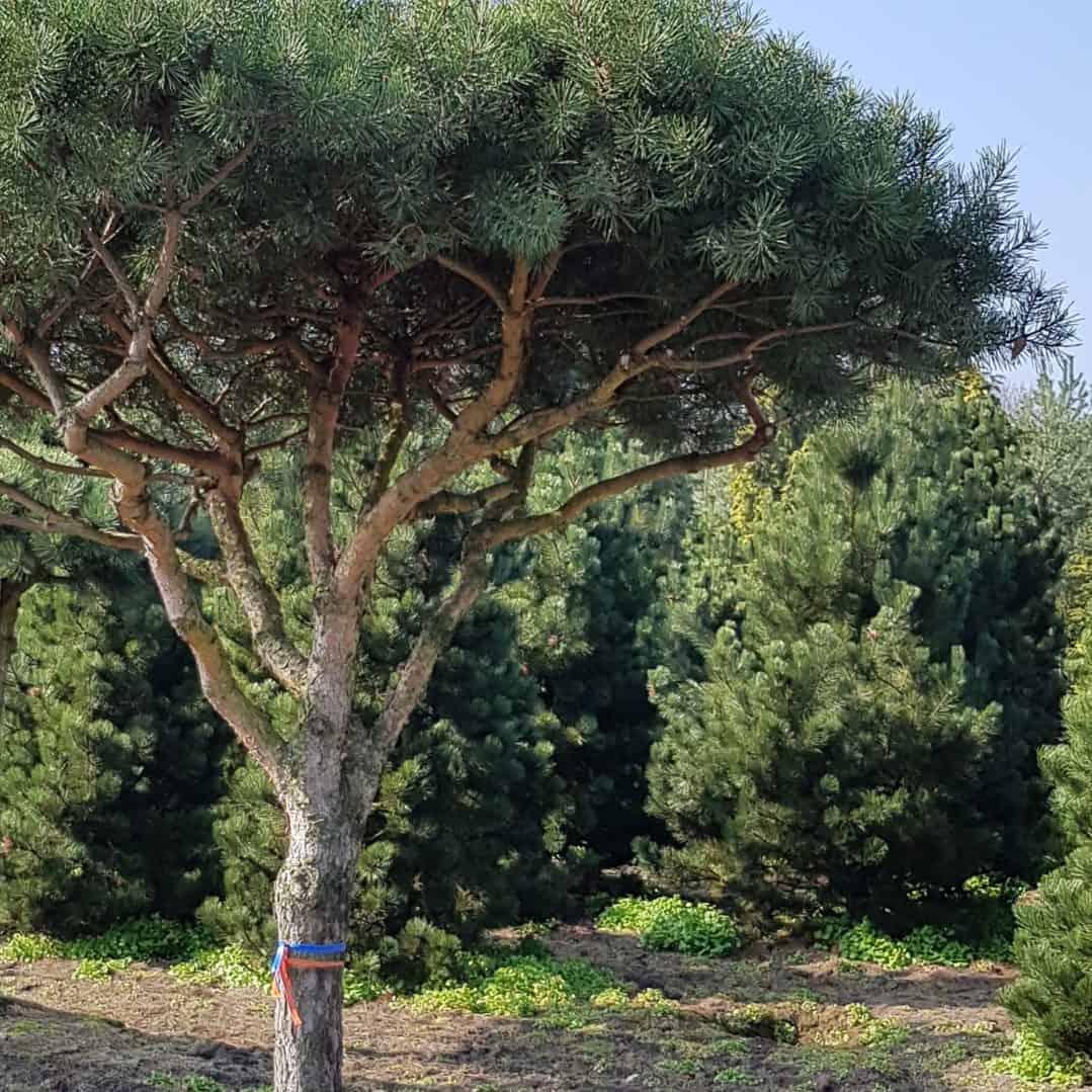 Gartendesign Gartengestaltung modern Baum