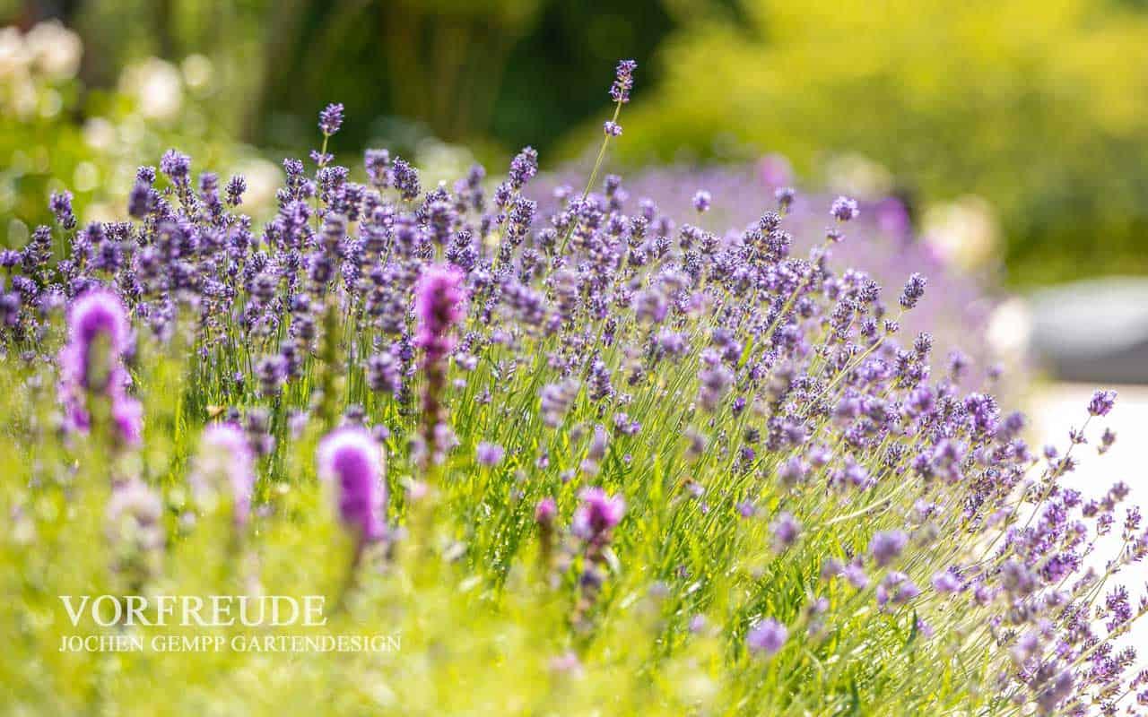 Gartensaison Gartengestaltung 2020